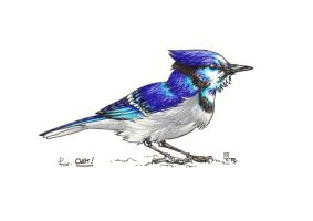 REQUEST - Blue Jay by T-R-n