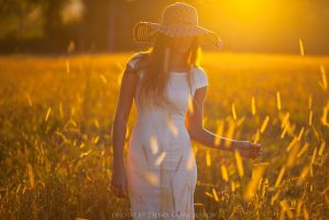 sun field by DenisGoncharov