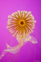 Jellyfish Flower by TerribleTer