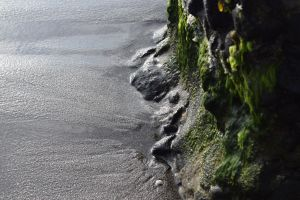Algae On A Gray Sand Beach by discoinferno84