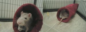 Cotton and his new bed c: by strangmusicobsession