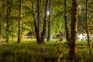 Trees in night by trumpikas