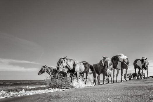 Maryland - Assateague Ponys by vamosver