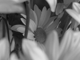 My-Stock - Flower8 by my-stock