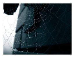 spider web by conceptions