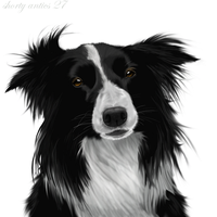 Border collie by shorty-antics-27