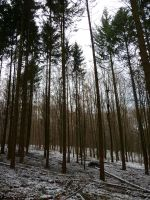 winterforest II by mimose-stock