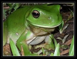 Green tree frog 2 by DesignKReations