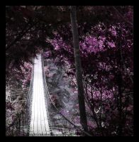 Purple Suspension by Hallow2