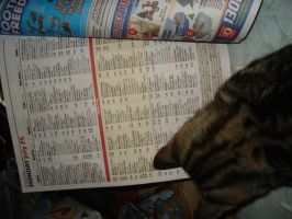 cat reading the tv guide by returnofadamspong