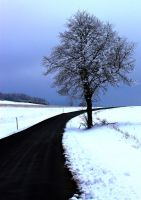 Road Through Winter by jessyhorse