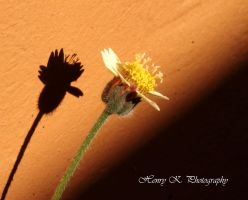 Flower-and-its-shadow by fotoponono