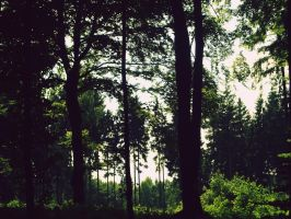 Forest jungle 2 by L-JustinePhotography