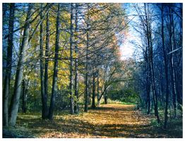 Autumn forest by Angelov-net
