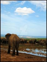 Elephants at Harpoor Dam 2 by Stryde22