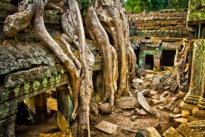 Ta Prohm green glow by lesterlester