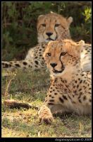 SISTERS by dogansoysal
