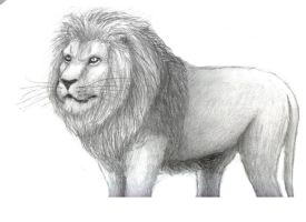 Lion by Clivelee