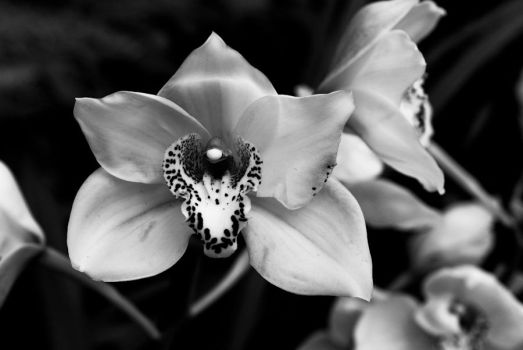 MOBOT: 2011 Orchid Exhibit X by breaking-reality