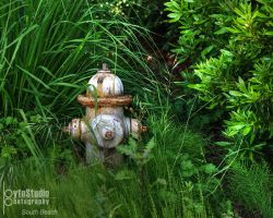 Fire Hydrant HDR by ByteStudio