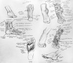 Anatomy Foot Musculature by yolque