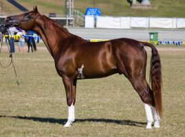 STOCK - Gold Coast Show 031 by fillyrox