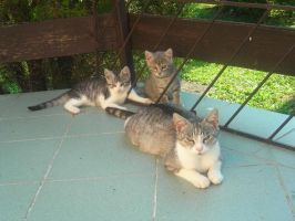 Cats by Donna-Rayna