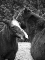 mother and daughter grooming by Blue-eyed-Kelpie