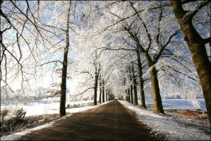 Winterwondeland in Holland VII by Betuwefotograaf