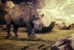 The last rhino by AleksandarN