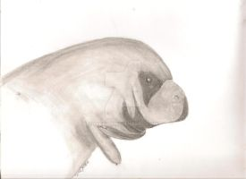 Sea Cow by MikkiC