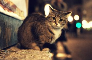 Street Cat. by inbrainstorm