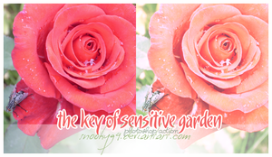 Sensitive Garden Actions PS by snooky94