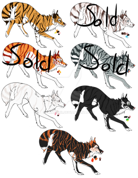 Wild Cat Wolf Adopts: Tiger by Akkaruii
