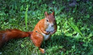 Squirrel by deoroller