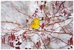 hey spring - where are you? by werol