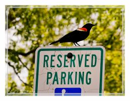 Reserved Parking by leavenotrase