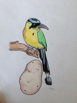 Potato and Motmot #1 by juliolsson