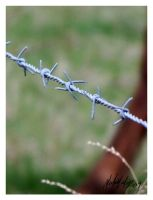 Barbed wire by Famous-Panda