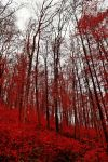 Bloodred Forest IV by Aenea-Jones