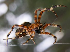 spider by Krell1983