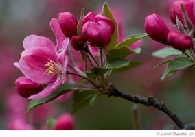 Buds and Blooms III by butterfly36rs