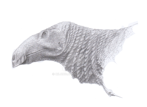 Edmontosaurus annectens and the Crest That Wasn't by Qilong