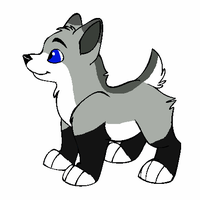 Crystal x Aero Puppy for CrystalGem523 by Twine-Adopts