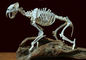 smilodon step4 by hannay1982