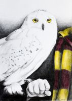 Hedwig by AllieRaines