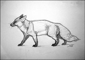 Sketchbook: Fox by newfka