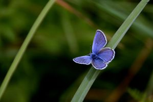 Blue butterfly by elanorsart