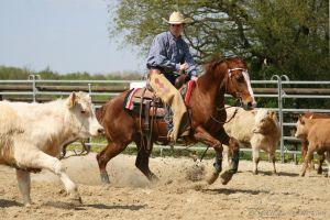 western horse sport cutting 01 by Nexu4