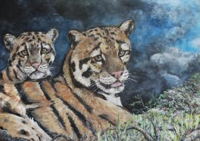 Clouded Leopards by acrylicwildlife